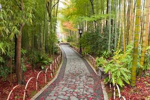 竹林の小径の写真素材 [FYI04667053]