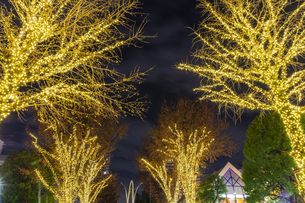 イルミネーションの光が丘公園 東京夜景の写真素材 [FYI04667066]