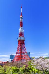 桜咲く春の芝公園と東京タワーの写真素材 [FYI04667135]