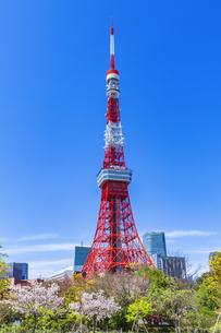 桜咲く春の芝公園と東京タワーの写真素材 [FYI04667136]