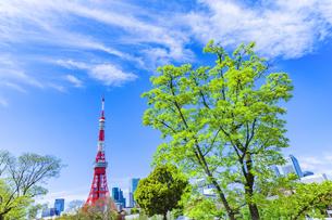 新緑の木立と東京タワーの写真素材 [FYI04667137]