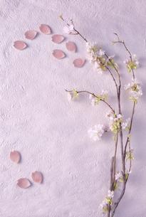 ピンクの和紙の上に置かれた桜の枝と花びら型の箸置きの写真素材 [FYI04667180]