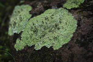 白駒の苔の森の写真素材 [FYI04667425]