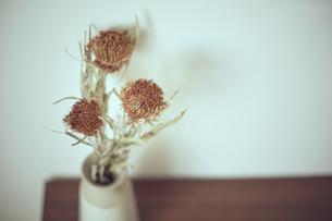 花器に生けられたバンクシャーのドライフラワーの写真素材 [FYI04667662]
