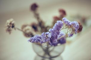 花器に生けられたスターチスのドライフラワーの写真素材 [FYI04667666]