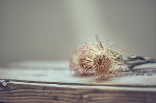 木箱の上のバンクシャーのドライフラワーの写真素材 [FYI04667668]