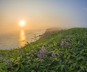 北海道 自然 夕日の写真素材 [FYI04667741]
