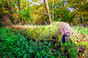 九重連山の東麓、黒岳原生林で湧く男池湧水群の紅葉の写真素材 [FYI04668094]