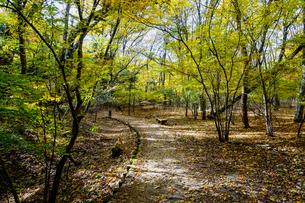 九重連山の東麓、黒岳原生林で湧く男池湧水群の紅葉の写真素材 [FYI04668095]