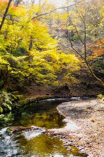 九重連山の東麓、黒岳原生林で湧く男池湧水群の紅葉の写真素材 [FYI04668097]