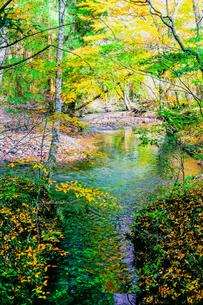 九重連山の東麓、黒岳原生林で湧く男池湧水群の紅葉の写真素材 [FYI04668103]