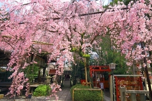 京都 水火天満宮の写真素材 [FYI04668175]
