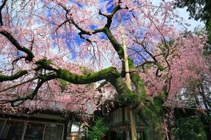 京都 水火天満宮の写真素材 [FYI04668177]