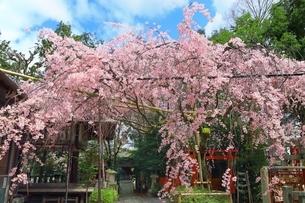 京都 水火天満宮の写真素材 [FYI04668178]