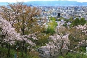 桜と八坂の塔 京都市街眺望の写真素材 [FYI04668184]