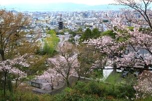 桜と八坂の塔 京都市街眺望の写真素材 [FYI04668187]