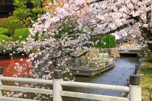 桜咲く高瀬川一之船入の写真素材 [FYI04668212]
