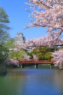 桜咲く姫路城の写真素材 [FYI04668249]