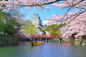 桜咲く姫路城と和船の写真素材 [FYI04668257]