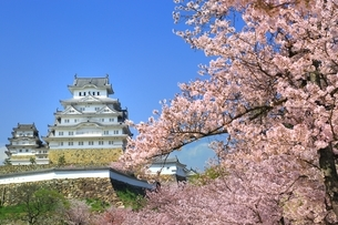 桜咲く姫路城の写真素材 [FYI04668261]