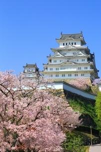 桜咲く姫路城の写真素材 [FYI04668262]