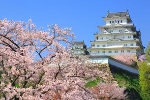 桜咲く姫路城の写真素材 [FYI04668263]