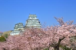 桜咲く姫路城の写真素材 [FYI04668266]