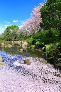 桜咲く葛城山麓公園と花筏の写真素材 [FYI04668270]