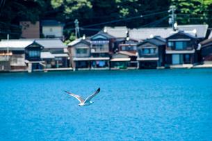 飛翔するかもめの写真素材 [FYI04668321]