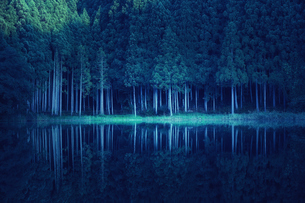 湖に映り込むスギの群生林の写真素材 [FYI04668520]