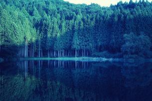 湖に映り込むスギの群生林の写真素材 [FYI04668522]
