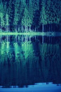 湖に映り込むスギの群生林の写真素材 [FYI04668524]