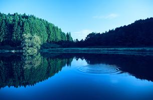 湖に映り込むスギの群生林と水面の波紋の写真素材 [FYI04668525]