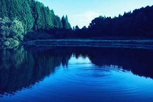 湖に映り込むスギの群生林と水面の波紋の写真素材 [FYI04668526]