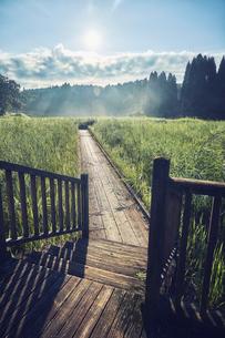 ススキの高原と木製の歩道の写真素材 [FYI04668528]