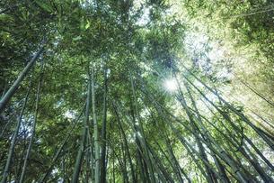 太陽の光が差し込む竹林の中の写真素材 [FYI04668547]