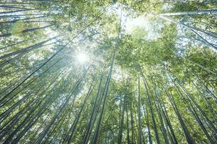 太陽の光が差し込む竹林の中の写真素材 [FYI04668552]