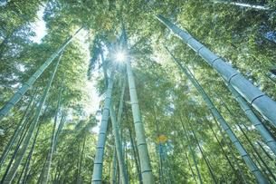 太陽の光が差し込む竹林の中の写真素材 [FYI04668560]