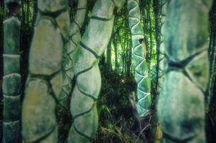 キッコウチクの竹林の写真素材 [FYI04668562]