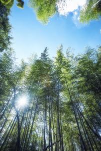 太陽の光が差し込む竹林の写真素材 [FYI04668564]