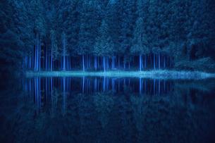 早朝の湖に映り込むスギの群生林の写真素材 [FYI04668569]
