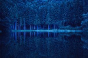 早朝の湖に映り込むスギの群生林の写真素材 [FYI04668570]