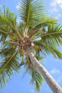 ヤシの木と青空の写真素材 [FYI04668810]