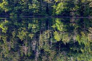 八ヶ岳 白駒池のリフレクションの写真素材 [FYI04668903]