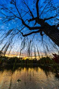 夕焼けを映す龍仙湖と枝垂れ柳の写真素材 [FYI04668921]