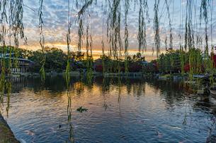 夕焼けを映す龍仙湖と枝垂れ柳の写真素材 [FYI04668924]