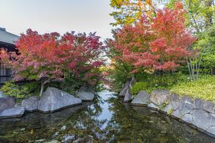 徳川園黒門口前の橋より龍門の瀧側の風景の写真素材 [FYI04668927]