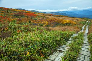 秋の月山弥陀ヶ原の写真素材 [FYI04668967]
