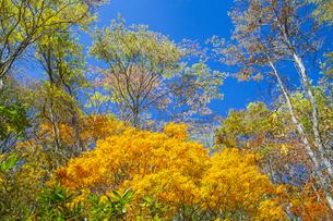 盛秋の戸隠高原森林植物園の写真素材 [FYI04669007]