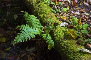 盛秋の戸隠高原森林植物園の写真素材 [FYI04669016]